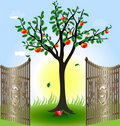 Apple tree and gates Stock Photography
