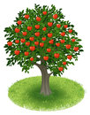 Apple tree in green field summer with red fruits illustration Royalty Free Stock Image