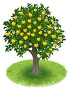 Apple tree in green field summer with yellow fruits illustration Royalty Free Stock Photography