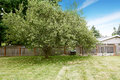 Apple tree growing on backyard countryside landscape Royalty Free Stock Photography