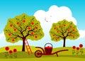 Apple tree orchard Royalty Free Stock Photo