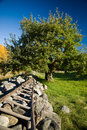 Apple Tree and Stone Wall Stock Photography