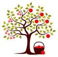 Apple tree in two seasons Royalty Free Stock Photo