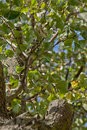Apple tree view from below blue sky foliage trunk Stock Photo