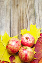 Apples and autumn maple leaves Royalty Free Stock Image