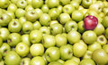 Apples background green and red Stock Images