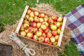 Apples in box large wooden containing red and green outside Stock Photography