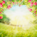 Apples branch with leaves over garden blurred background Royalty Free Stock Image