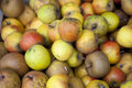 Apples close up of in autumn Royalty Free Stock Photo