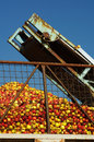 Apples conveyor belt agriculture themes Stock Image