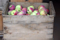Apples in crates a lot of a wooden crate Stock Images