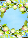 Apples - frame Stock Images