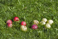 Apples in the grass Stock Photo