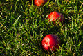 Apples Laying In Grass Stock Photo