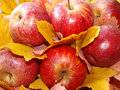 Apples and leaves Royalty Free Stock Photos