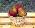 Apples in light brown wicker basket on wooden table ripe red and yellow against blur green background closeup Royalty Free Stock Photos
