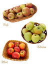 Apples - Malus collection Stock Photos