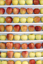 Apples the many are showed in shelves Royalty Free Stock Photo