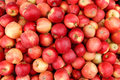 Apples photography of red ripe Stock Images