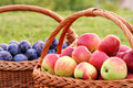 Apples and plums Royalty Free Stock Photography