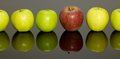 Apples in a row some green and red one on dark reflective ground Stock Photos