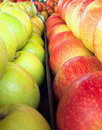 Apples rows closeup Stock Photography