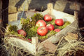 Apples in the wooden box lie on green moss Stock Photos