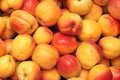 Apricot the background of fruits Stock Images