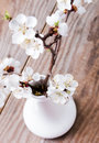 Apricot blooming brunches in the vase on wooden table Royalty Free Stock Photography