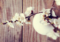 Apricot blooming brunches in the vase on wooden table toned photo Stock Photos
