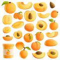 Apricot icons set, cartoon style