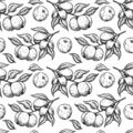 Apricot seamless pattern. Vector drawing. Hand drawn fruit, branch Royalty Free Stock Photo