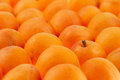 Apricots background, full frame Stock Photos