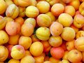 Apricots background of many ripe Stock Photo
