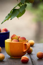Apricots in a ceramic bowl beautiful ripe on old table the garden Stock Photo