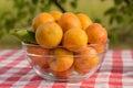 Apricots Royalty Free Stock Photo