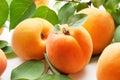Apricots. Fresh organic fruit on white background Royalty Free Stock Photo
