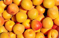 Apricots juicy ripe yellow red Royalty Free Stock Photo