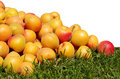 Apricots juicy ripe yellow red scattered on the green grass Stock Images