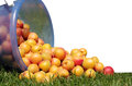 Apricots juicy ripe yellow red scattered on the green grass Royalty Free Stock Image