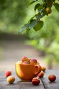 Apricots on an old table in the garden blurred background Stock Photography