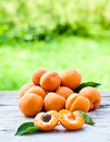 Apricots ripe on a old wooden table in garden Stock Photography