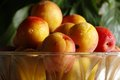 Apricots in transparent glass bowl ripe fresh a Stock Photo
