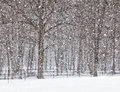 April snow showers in the form of a snowstorm landscape view of trees and fence line spring in wisconsin Royalty Free Stock Photography