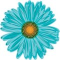 Aqua blue daisy flower Royalty Free Stock Photo