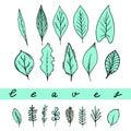 Aqua leaves set