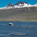 Aquaculture salmon fish farm fishing enclosure and boat in fjord iceland sea farming in round net fishing industry atlantic Stock Photography