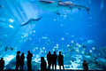 Aquarium in atlanta georgia june unidentified people watch a whale shark swim by at the Royalty Free Stock Images