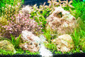 Aquarium coral reef with green alga serenity Stock Photo