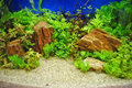 Aquarium decoration close up to Stock Photos